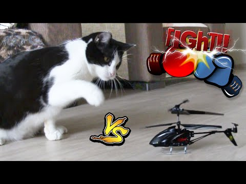 FUNNY CAT vs RC helicopter