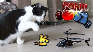 FUNNY CAT vs RC helicopter(Сat meets a radio-controlled helicopter. The danger of the new and unknown next. Who will emerge victorious? Video: https://youtu.be/ZDDKivbqssI ..., 2016-03-14T11:54:48.000Z)