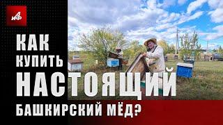 Как купить настоящий башкирский мёд?