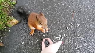Как кормить белку с руки в парке ЦПКиО в Петербурге