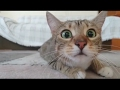 Cats watching scary movies video