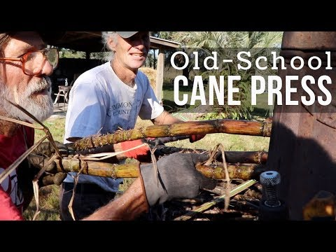 Sugarcane Harvest to Market:  How to Press & Make Syrup (Part 1)