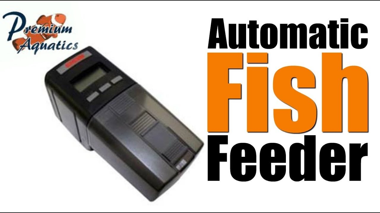 food automatic auto feeder dial one dispenser eheim aqua a fish holiday diet