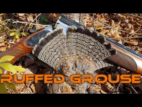 Autumn Blaze Ruffed Grouse Hunting 6