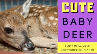 Cute DEER [ Baby Animals] Funny Animal Videos for Kids