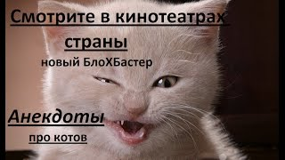 Анекдоты про котов ( ржака ) - новый БлоХБастер.