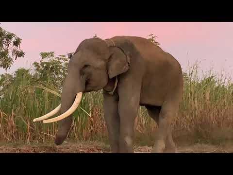 พี่เเซมสุดหล่อ big elephant