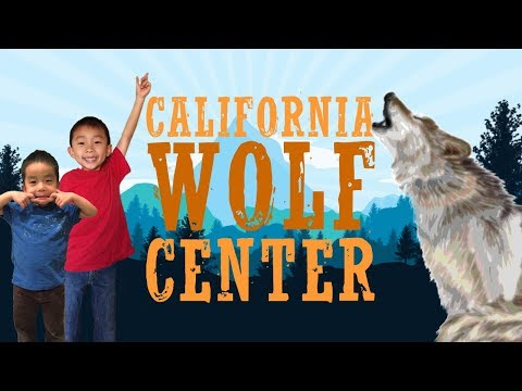 California Wolf Center (Things to do in Julian, California): Traveling with Kids