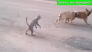 Дикие кошки  Война кошек против собак  Кошки нападают на собак