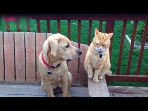 Köpekler Neden Kedileri Kovalar? ''Cevaplıyoruz''