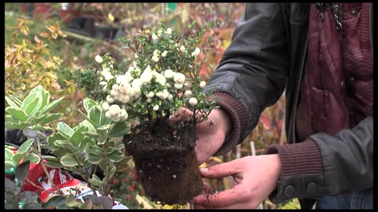 Jesenja sadnja cvijeća - YouTube