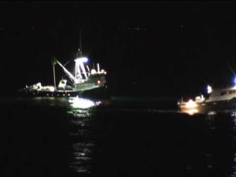Squid Boats Off La Jolla