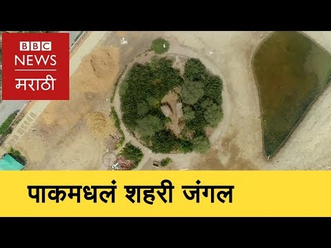 Urban forest in Pakistan Inspired by an Indian । कराचीत वेगानं वाढतंय जंगल (BBC News Marathi)