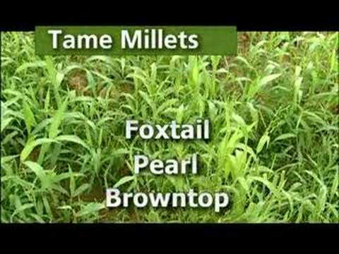 3 Of 10 - Important Plants For Quail
