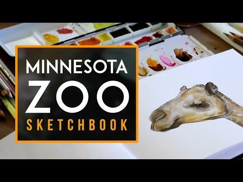 Minnesota Zoo + Sketchbook