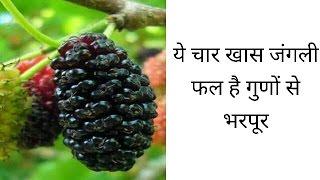 ये चार खास जंगली फल है गुणों से भरपूर   this wild fruits is very beneficial   janiye kaise  
