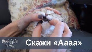 У кошки черный рот?