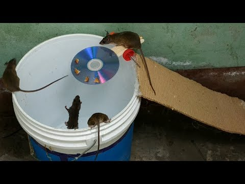 Bucket Mouse Trap,The Best Mouse Trap I've Ever Seen