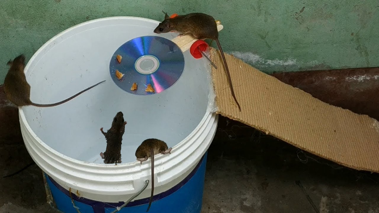 mouse trap I've ever seen