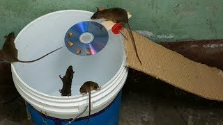 Bucket Mouse Trap,The best mouse trap I\'ve ever seen