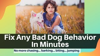 Dog Training Secrets Video Course By Anthony Louis: [Fix Any Bad Dog Behavior In Minutes]