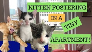Can I Foster Kittens in an Apartment? Here's how!