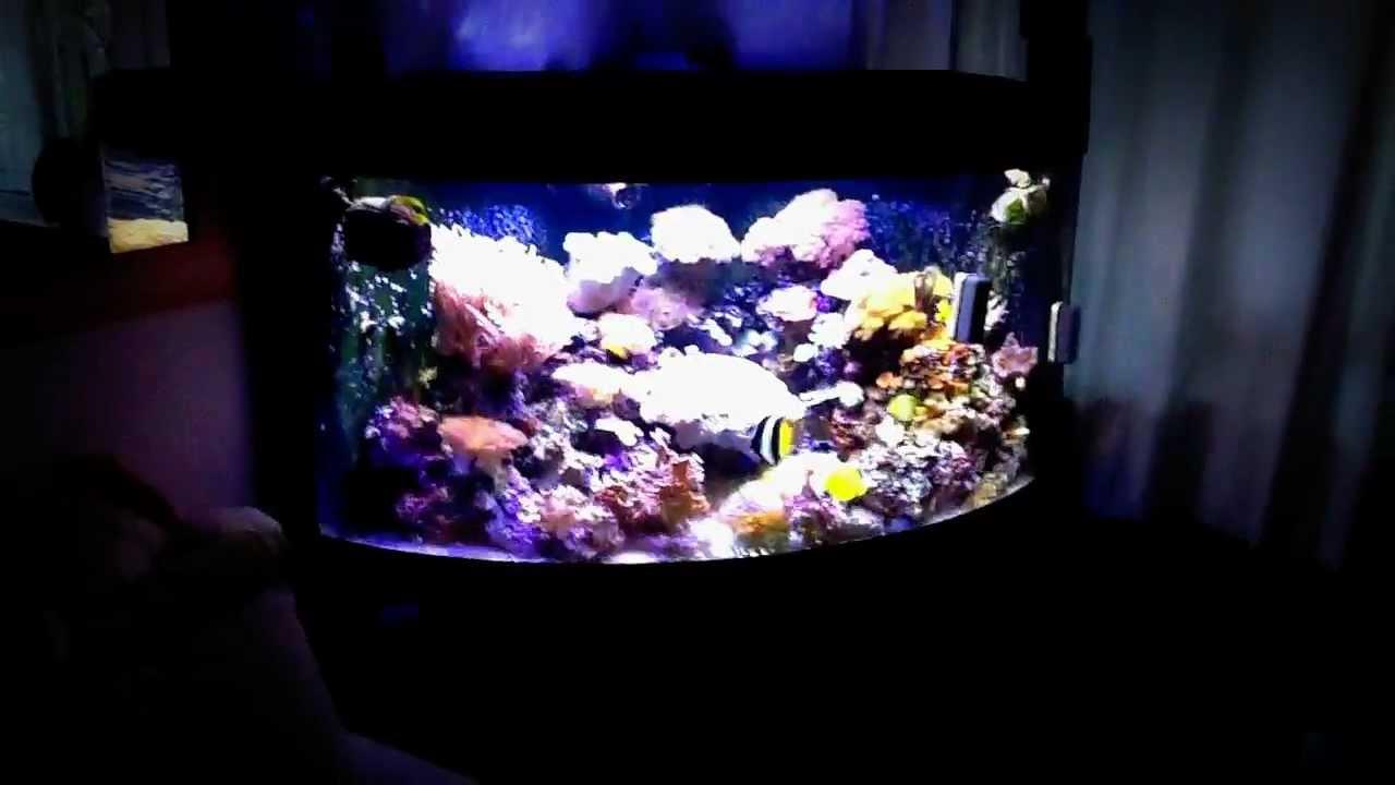 reef tank juwel trigon 350 l 1 youtube. Black Bedroom Furniture Sets. Home Design Ideas