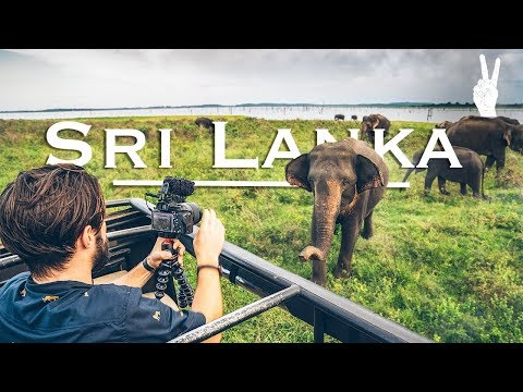 Awesome Elephant Encounter on Safari in Sri Lanka