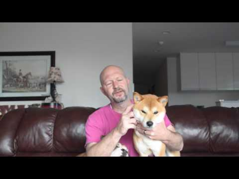 How often and when to bathe your SHIBA INU IMPORTANT !!!!!