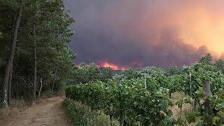 فيديو..مصرع 19 شخصًا وإصابة 20 في حريق غابات وسط البرتغال