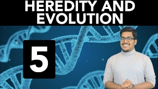biology heredity and evolution part 5
