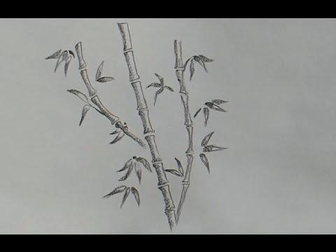 Как нарисовать бамбук карандашом поэтапно