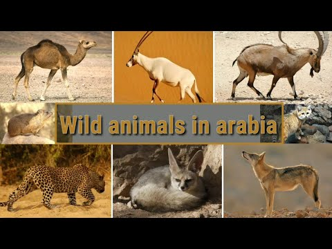 Wild Animals In Arabia