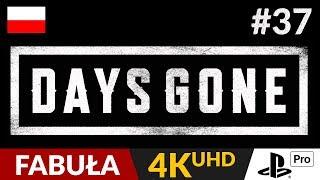 Days Gone PL  #37 (odc.37)  Droga w jedną stronę | Gameplay po polsku 4K