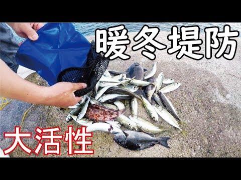 暖冬堤防大活性!足元に湧き出る獲物を釣りあげる