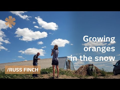 Nebraska retiree uses earths's heat to grow oranges in snow