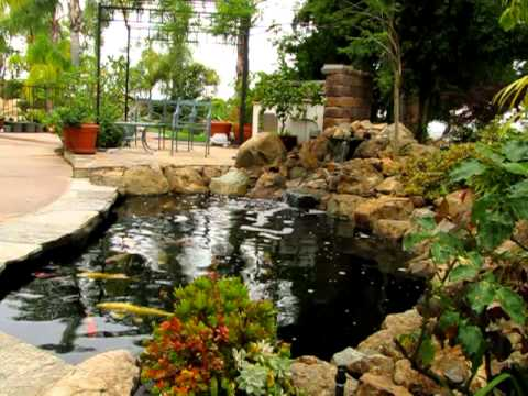 Natural rock waterfall and koi pond with disappearing edge for Natural fish pond