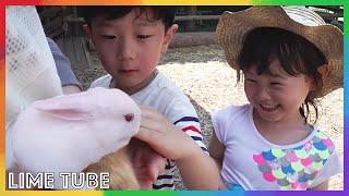 라임이의 홍천 휘바핀란드 양떼목장 방문기 | 홍천 애완동물 농장 가족 나들이 LimeTube & Toy 라임튜브 cute Pets