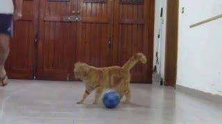 Кот и мячик от РУССКАЯ ПРИРОДА