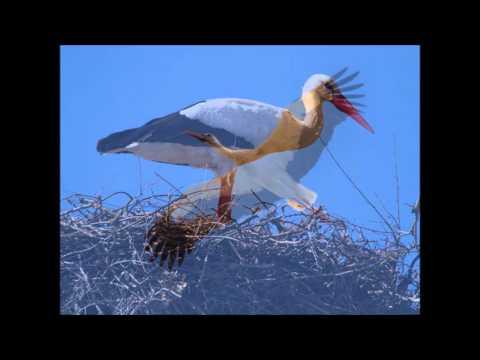 Extremadura vogel