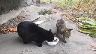 Семейство кошачьих почти в сборе , все те же милахи