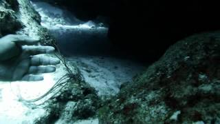 Shark Encounter in Cave Roatan GP102