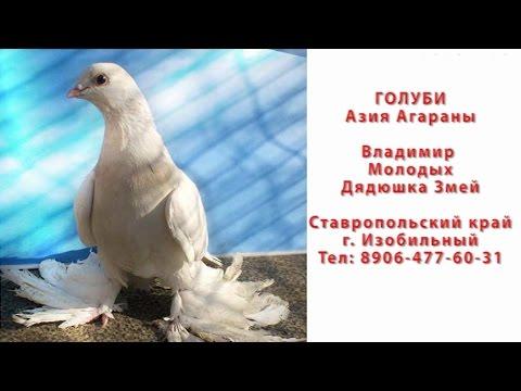 Голуби Агараны Изобильный Ставропольский край часть 3. Полёты.