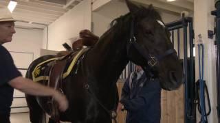 RCMP: Horse Prep - Saskatchewan, Canada