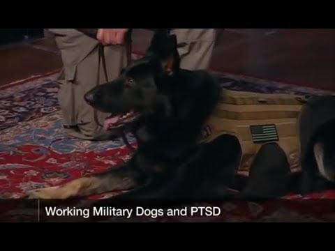 Untold Stories of Canine Heroes