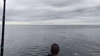 Är det delfiner som skymtats utanför Skateholm?