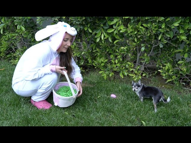 Doing An Easter Egg Hunt For My Dogs