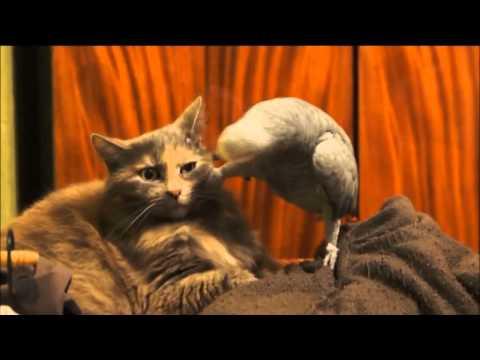 коты и попугаи видео приколы самые смешные