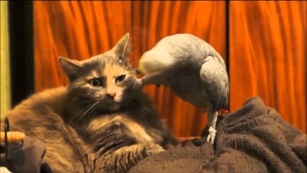 Кот и попугай а че