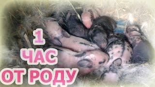 Смешные новорожденные крольчата малыши. (09.11.2015)